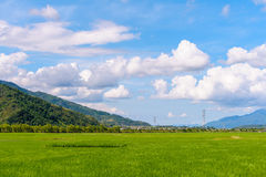 Rice seedlings in Rice fields Stock Photography