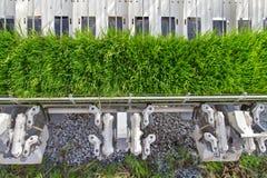 Rice seedlings on rice planting machine Royalty Free Stock Photo