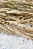 Rice seeds Royalty Free Stock Photos