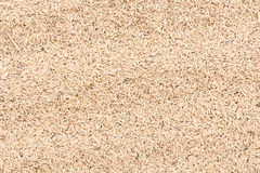 Rice seeds Royalty Free Stock Photos