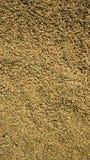 Rice seeds sun drying wallpaper Stock Photos