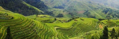 Rice segregował taras w Dazhai obraz stock