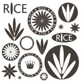 Rice. Set Stock Photos