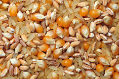 Rice, spelt and maize texture Royalty Free Stock Photography