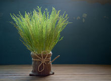 Rice spike. Royalty Free Stock Photos