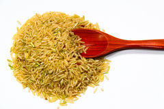 Rice and spoon Stock Image