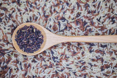 Rice spoon Stock Photography
