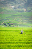 Rice step terrace in Vietnam Stock Photo