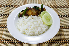 Rice and Stir-fried crispy pork Stock Images