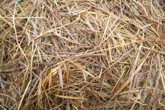 Rice straw Royalty Free Stock Image