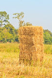 Rice straw Royalty Free Stock Photo