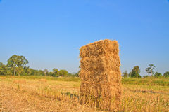 Rice straw Royalty Free Stock Images
