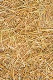 Rice straw background stock images
