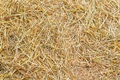 Rice straw background Royalty Free Stock Photography