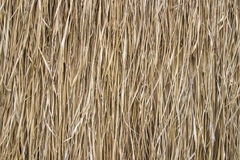 Rice straw background Stock Image
