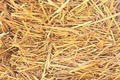 Rice straw background Stock Image