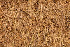 Rice straw background, Thailand Royalty Free Stock Photography