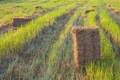 Rice straw bale shape. Royalty Free Stock Image