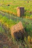Rice straw bale shape. Stock Images