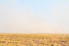 Rice straw burning in the farm for agriculture Stock Images
