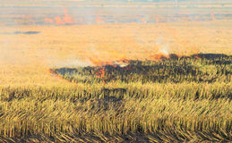 Rice straw burning in the farm for agriculture Royalty Free Stock Image
