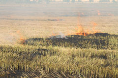 Rice straw burning in the farm for agriculture Stock Photo