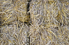 Rice straw Royalty Free Stock Photos