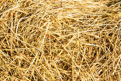 Rice straw Royalty Free Stock Image