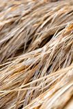 Rice straw Stock Photography