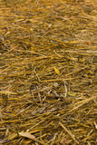Rice straw after completion Stock Photos