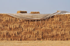 Rice Straw for cow Royalty Free Stock Image