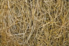 Rice straw farm background Stock Photography