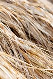 Rice straw in farm Stock Photography