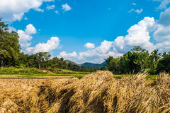 Rice straw, forest, smoky clouds and sky Royalty Free Stock Image