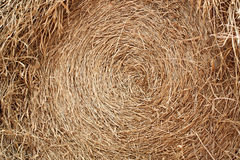 Rice straw after harvest. Royalty Free Stock Image