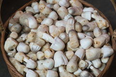 The rice straw mushroom for sell in the market Royalty Free Stock Images