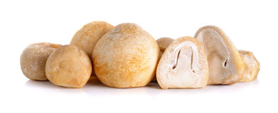 Rice straw mushrooms isolated on white background Royalty Free Stock Image