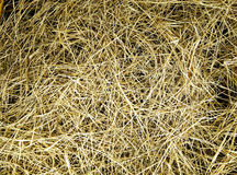 Rice straw. Pending the completion of the harvest to feed stock image