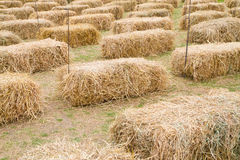 Rice straw pile Royalty Free Stock Image