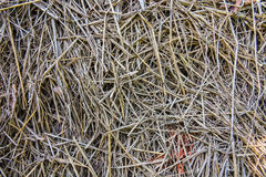 Rice straw texture. This is a rice straw texture stock photos