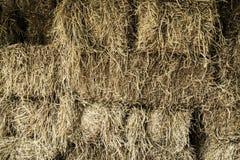 Rice straw texture Stock Image