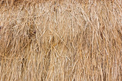 Rice straw texture background. Rice straw texture background in the farm Royalty Free Stock Photo