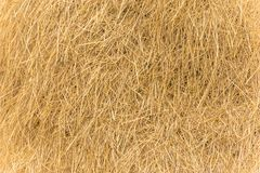 Rice straw texture. Background, dry of rice leaf, gold color leaves texture concept stock photo