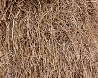 Rice straw texture. Royalty Free Stock Images