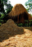 Rice stubble and barn Royalty Free Stock Images