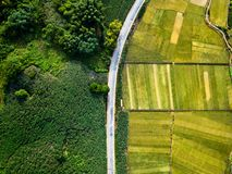 Rice and sugar cane fields divided by road aerial view. Rice and sugar cane fields of south China divided by road aerial view royalty free stock photography