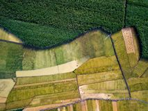 Rice and sugar cane fields in Southern China aerial. View royalty free stock images