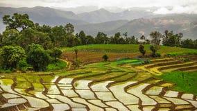 Rice taras Zdjęcie Royalty Free