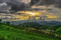 Rice taras i chmurny Zdjęcia Stock
