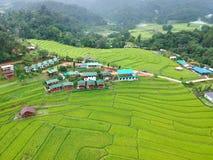 Rice taras przy Doi Inthanon parka narodowego Chom paska Chiang Mai Gromadzką prowincją, Tajlandia w ptasiego oka widoku obraz royalty free